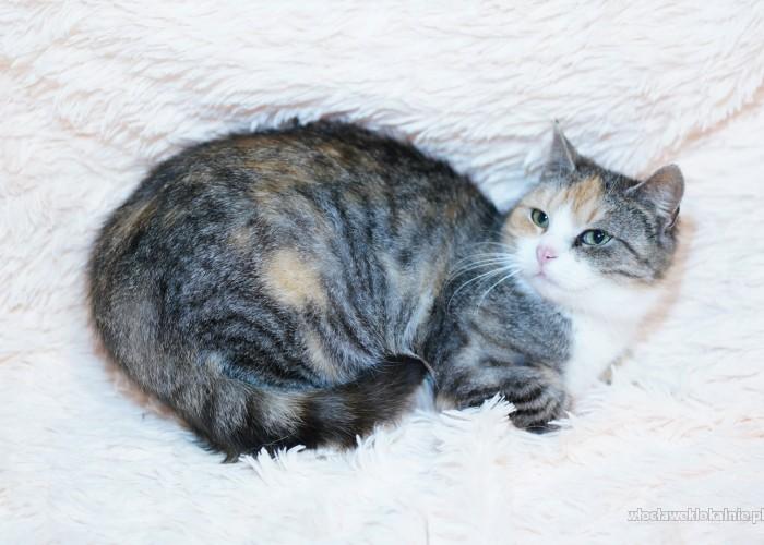 Triksi, młoda, przyjazna koteczka szuka domu!