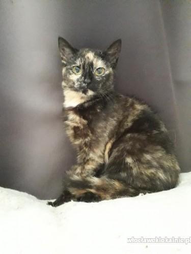 Fiona, 6 miesięczna kotka szuka domu!